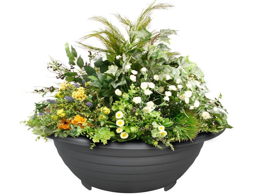 Tapered cast iron flower pot with circular supports Passiflora
